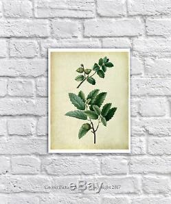 Vintage Botanical Print Set Of 6 Free Wall Frame Art Oak Leaves Symbol