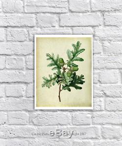 Vintage Botanique Imprimé Lot de 6 sans Cadre Mural Art Chêne Feuilles Symbole
